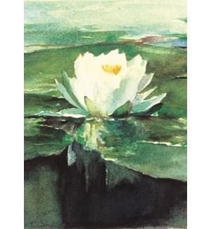 Water Lily In Sunlight-La Farg