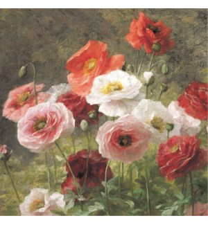 Poppies Lemaire