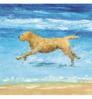 Sea Dog - Yellow Houston