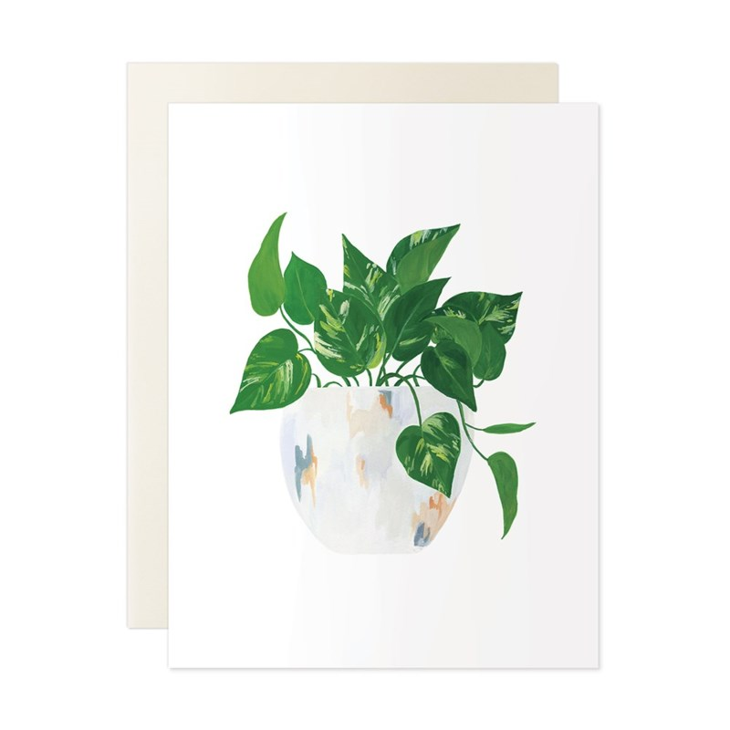 House Plant Assorted Set of 5