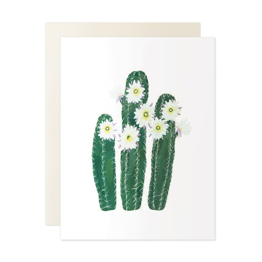 Flowering Cacti Assorted Set of 6