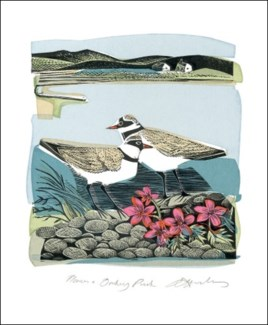 Plovers and Orkney Pinks 5.5x6.75|Art Angels