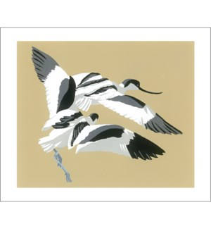 Avocets Chase|Art Angels