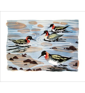 Phalaropes, Shetland|Art Angels