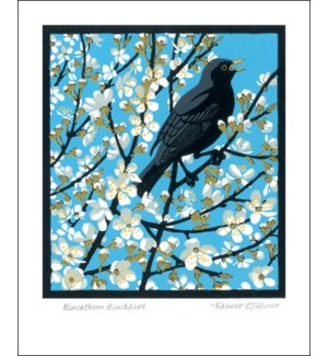 Blackthorn Blackbird|Art Angels