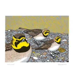 Shore Larks|Art Angels