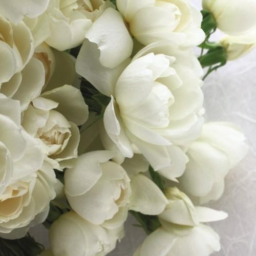 White Rose Bouquet 5x7|Art Press