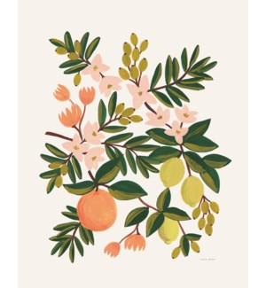 Citrus Floral Print (16x20)