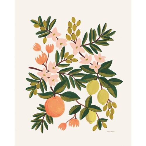 Citrus Floral Print (8x10)