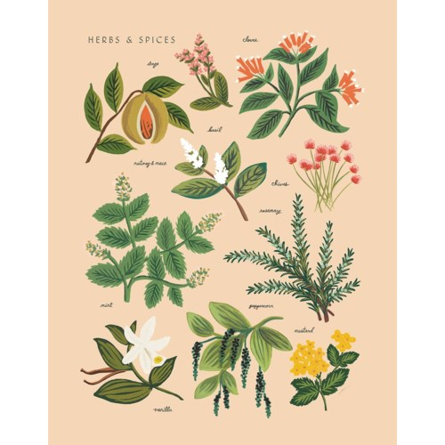 Herbs & Spices Small Print (11x14)