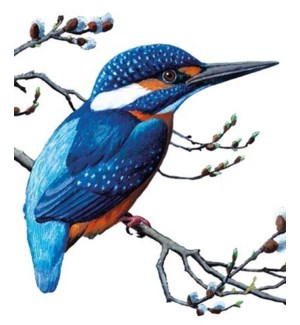 Kingfisher|Archivist