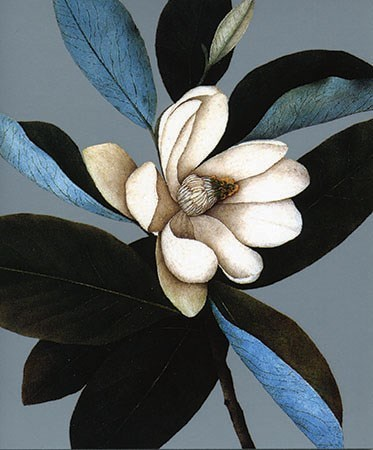Magnolia 5x6|Archivist