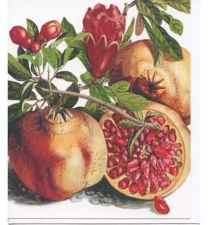 Pomegranate|Archivist