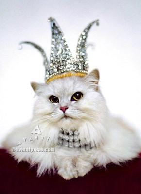 Princess Kitten 5x7 Z