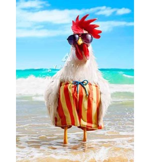 Rooster Wears Swimsuit 5x7|Z