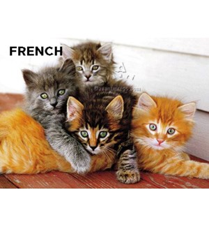 French Four Kittens Snuggling French 5x7 |Z