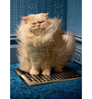 Cat Over Grate|Z