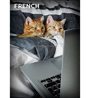 French Two Cats In Bed|Z