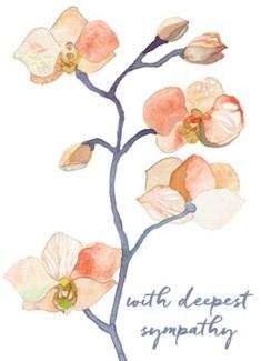 Peach Orchid 5x7|Calypso