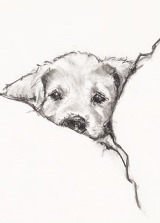 Dog In Bed 5x7|Calypso