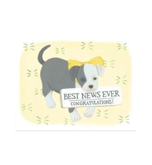 Best News Puppy|Halfpenny