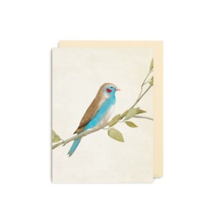 Red Cheeked Cordon Bleu Finch Minid|Lagom Design