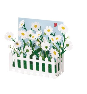 Johnson Picket Fence Daisies