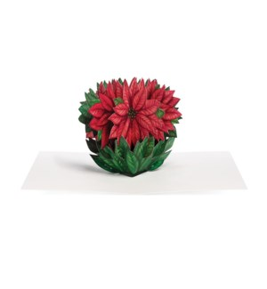 Dahmen Cheerful Poinsettia box of 8