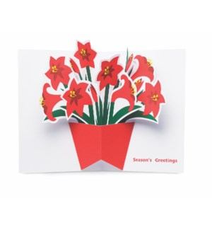 Festive Amaryllis-Boxed Cards  8 cards - AVAIL SEPT 2019