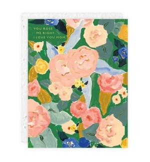Rose|Seedlings