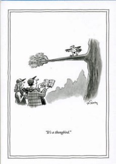 Thongbird 5x7|New Yorker