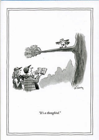 Thongbird 5x7|New Yorker