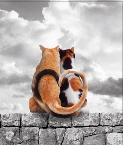 Alamy Feline the Love  4.5x5.5| Portfolio