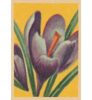 Easter Crocus|Art Press