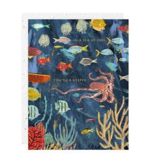 Under The Sea|Seedlings