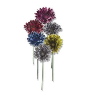 FLOWERS #6094 ZEBRA PRINT GERBER DAISY ST