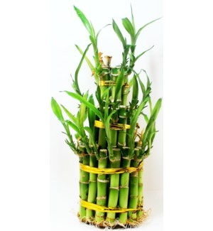 LUCKY BAMBOO - 3 LAYERS LARGE