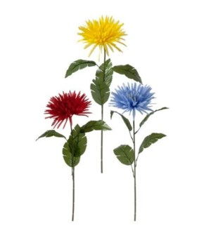 FLOWERS #6017 GIANT SPIDER MUM STEM