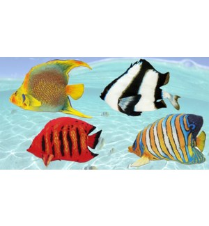 Assortd Fish Cushion Shell