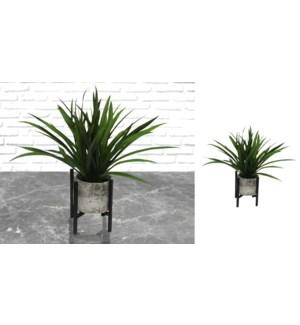 Plante verte dans un pot de ciment - 12x38-6B