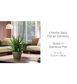Grass in bamboo pot D15.5xH38cm 8B