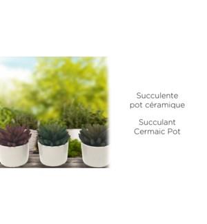 Succulent Pot En C'ramique - 8x9.5 - 12B
