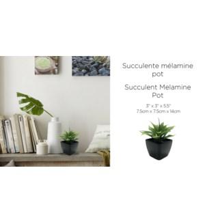 Succulente M'lamine Pot Noir 7.5x7.5x14-12B