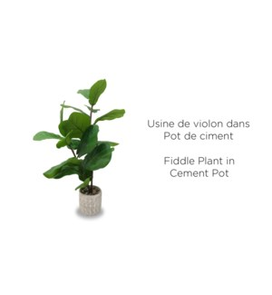 Plante … violon en pot de ciment - 14x78 - -4B