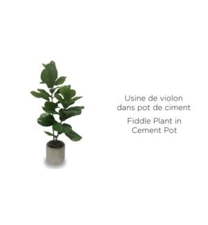 Plante … violon en pot de ciment - 12.5x64 - 4B