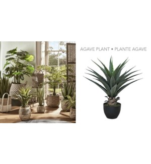 Agave Plant 70CM-4B