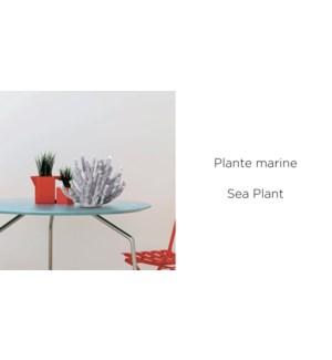 Mer plante 17x11x14.5 -12B