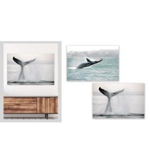 Baleine 21- 60x90-4B