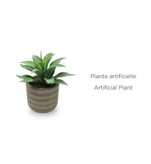 Succulente en pot gris 10.5x17-12B