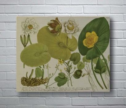 Folio I-Botanical and Floral